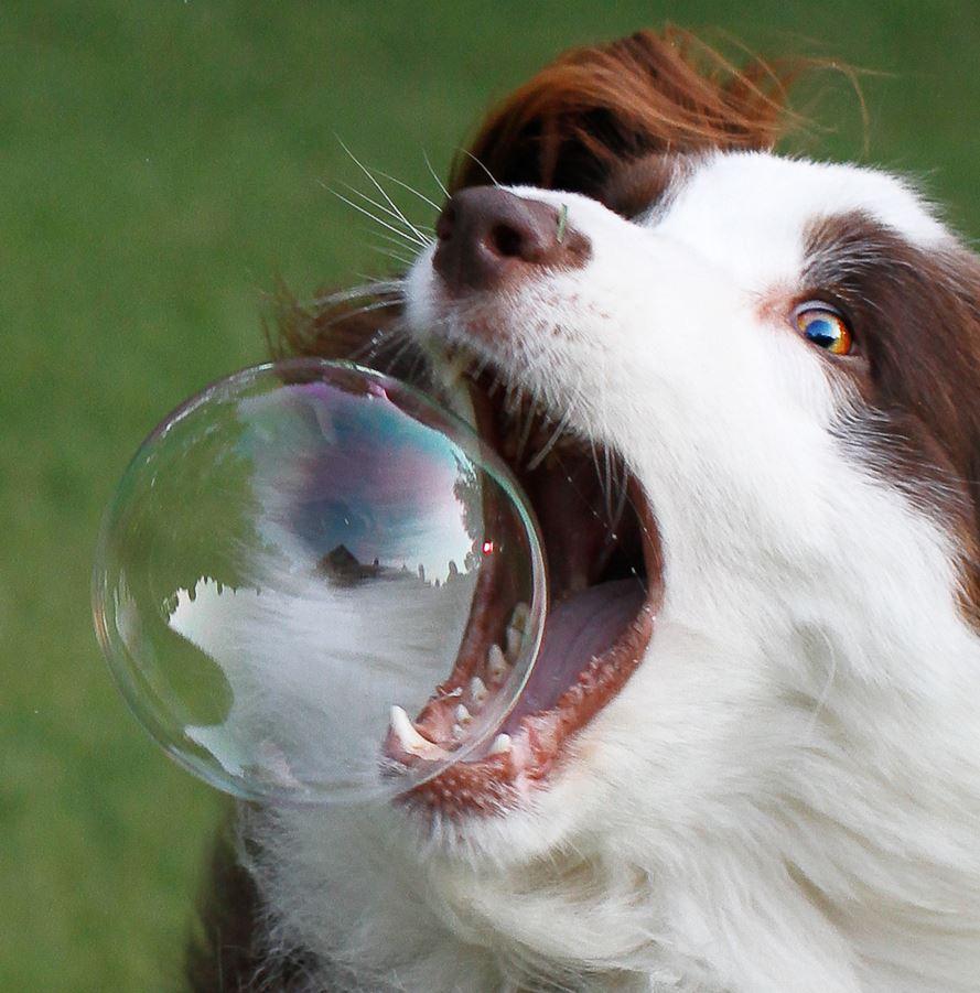 Verhalten von Hunden