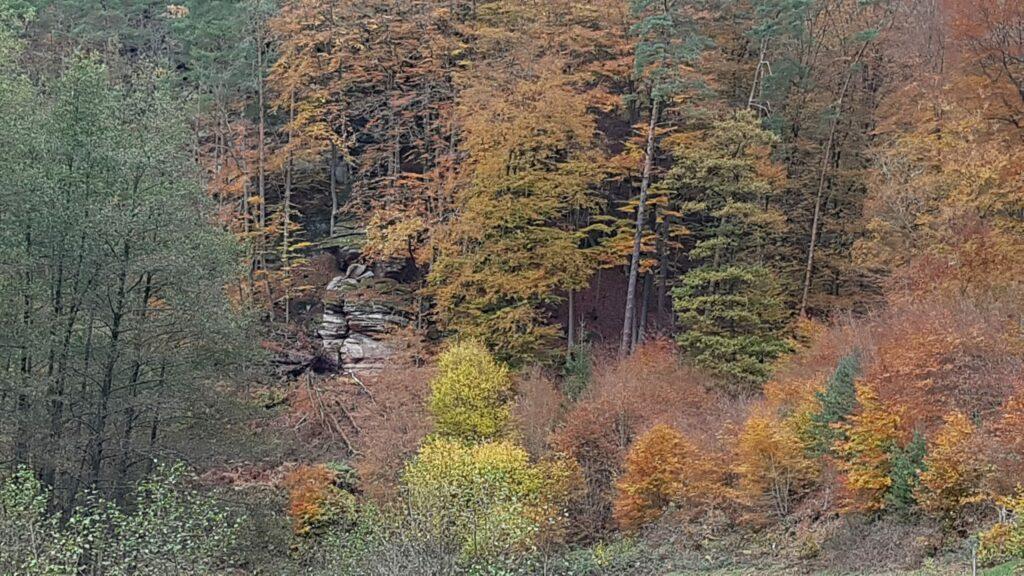 Herbstzeit draußen im Wald