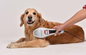 Laserdusche Power-Twin XP5 für Hunde, Katzen und Pferde